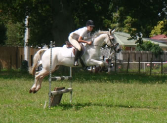 Random image from Our Riding School Ponies